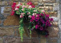 Hanging basket against granite wall