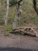 Jersey St Catherines Woods rope swing